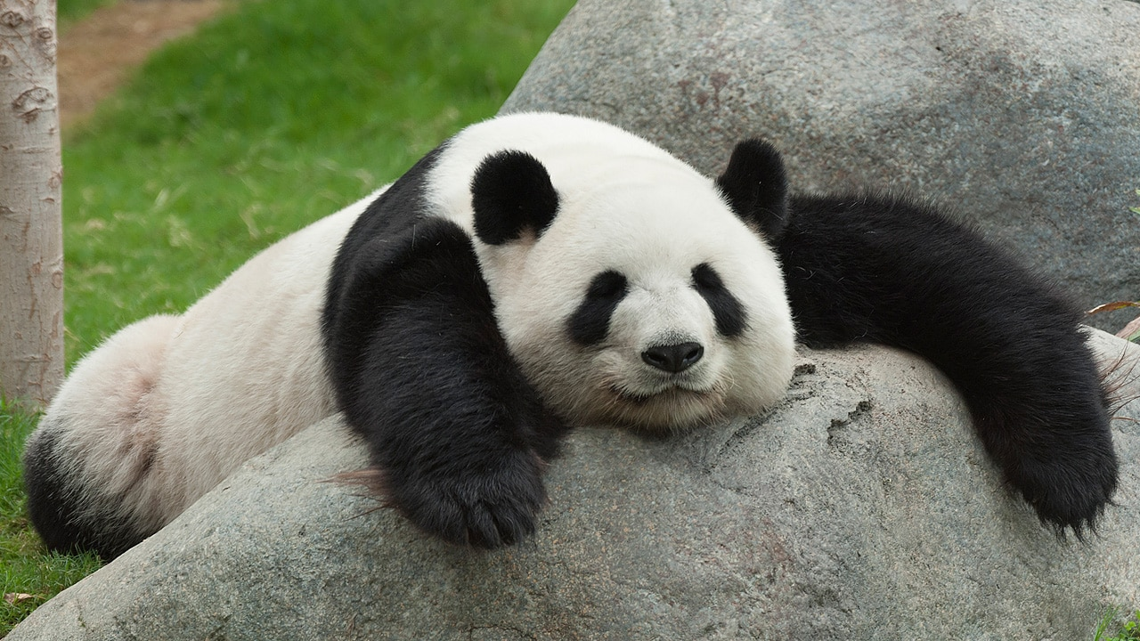 Did You Loose Website Traffic with the Release of Google Panda 4.1?
